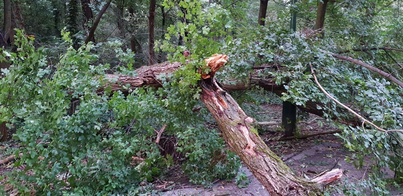 Kidőlt fa – személyi sérülés nem történt