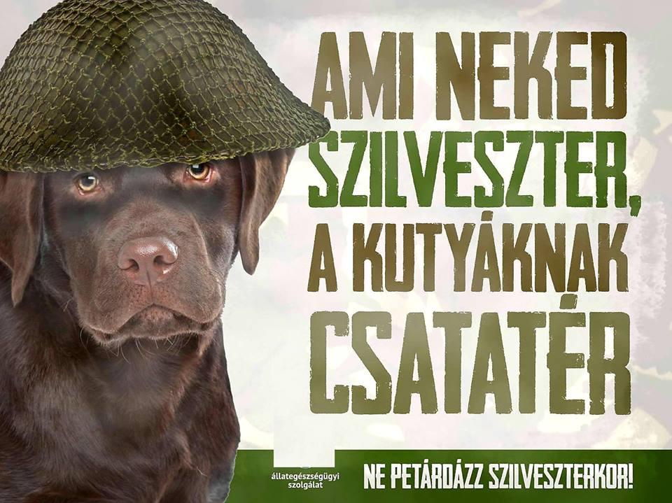 Szilveszter – vigyázzunk a kutyákra és a cicákra!