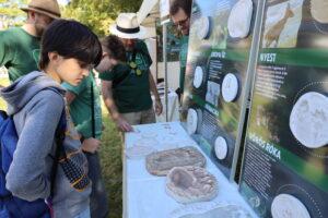 Gödöllő Város Önkormányzata Megkezdődtek a Nemzetközi Természet- és Környezetvédelmi Fesztivál eseményei